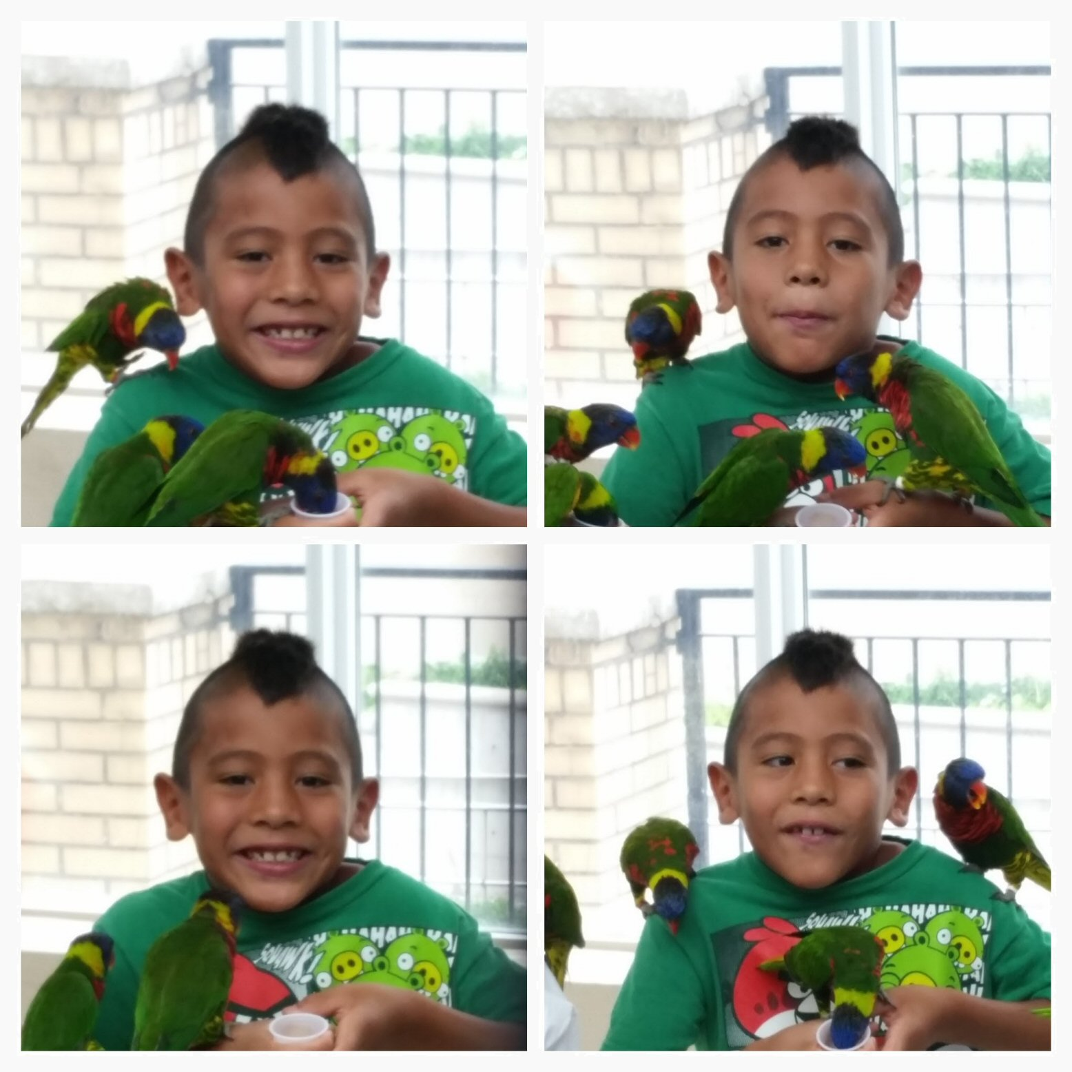 The Many Faces of H with the Lorikeets