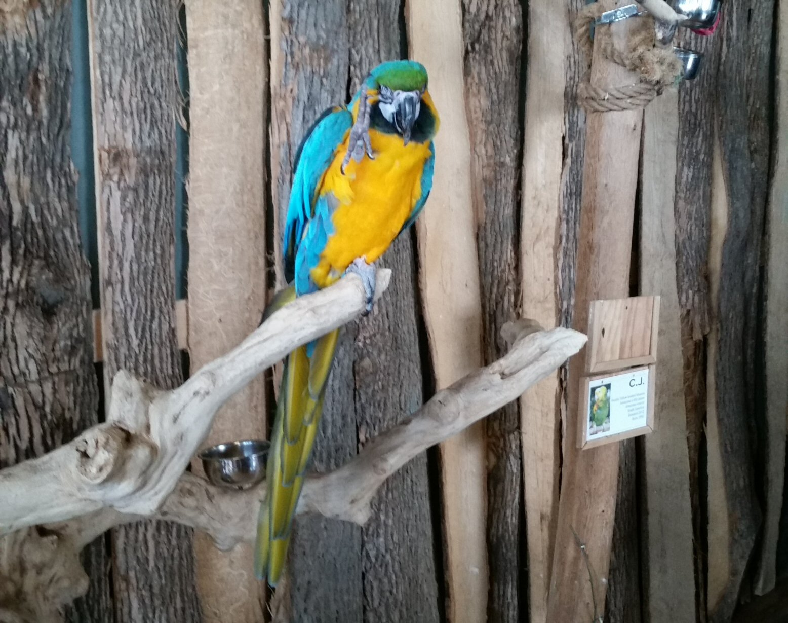 A Parrot in the Small Aviary